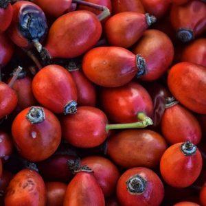 Rose Fruit